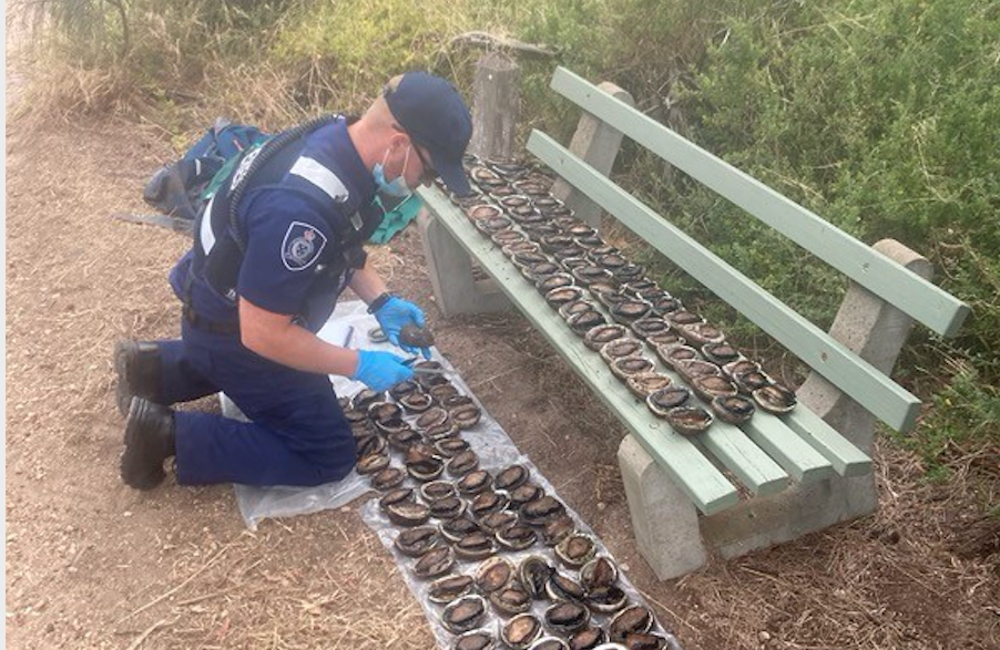 Seven arrested for abalone poaching